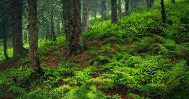 bosque - medio ambiente