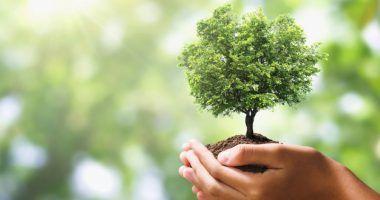 españa ods - arbol y sostenibilidad
