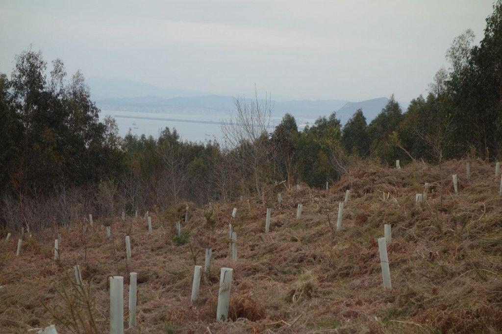 Proyecto de reforestación en Cantabria liderado por SEO/BirdLife