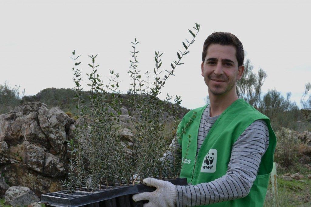 wwf plantar un árbol