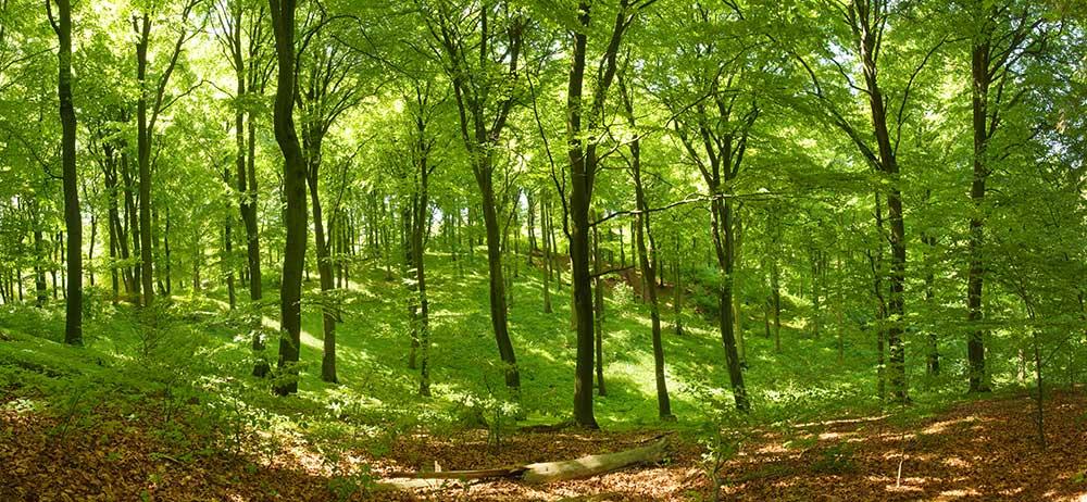 cambio climatico preservar bosques