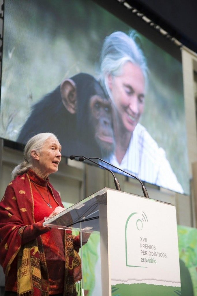 jane goodall personalidad ambiental del ano ecovidrio