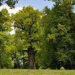 Árbol europeo del año