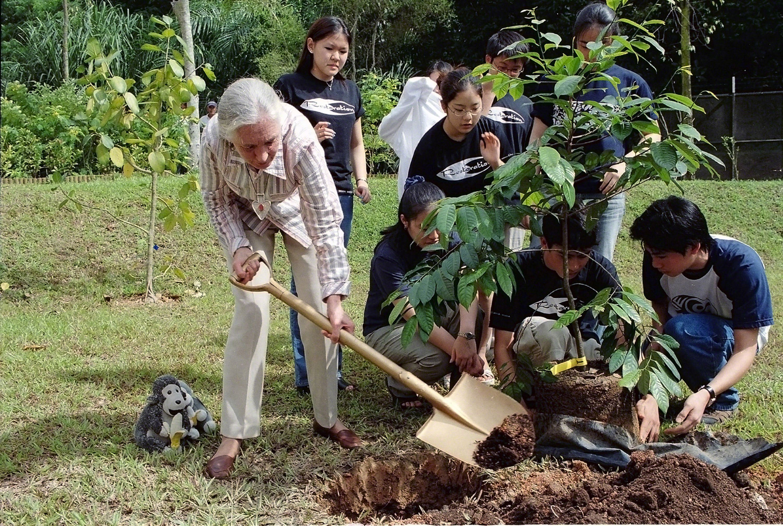 """La doctora Jane Goodall y alumnos participantes en el programa """"Roots & Shoots"""" plantan árboles en Singapur"""