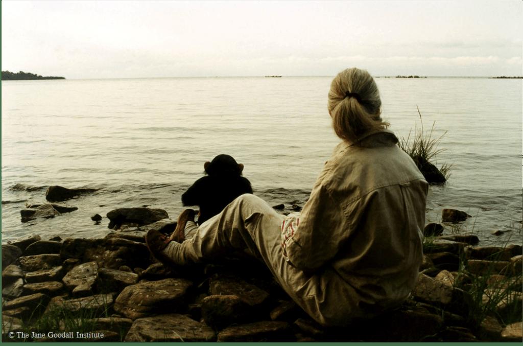 Jane Goodall Lago Victoria