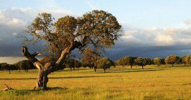 Extremadura Luisangel Flickr