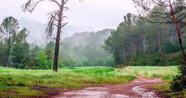 Fenómenos atmosféricos - lluvia y bosque