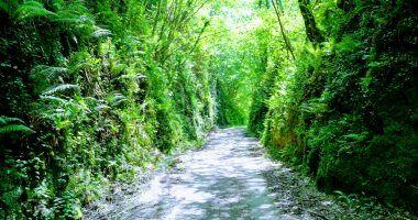 Imagen de una de las vías verdes de españa