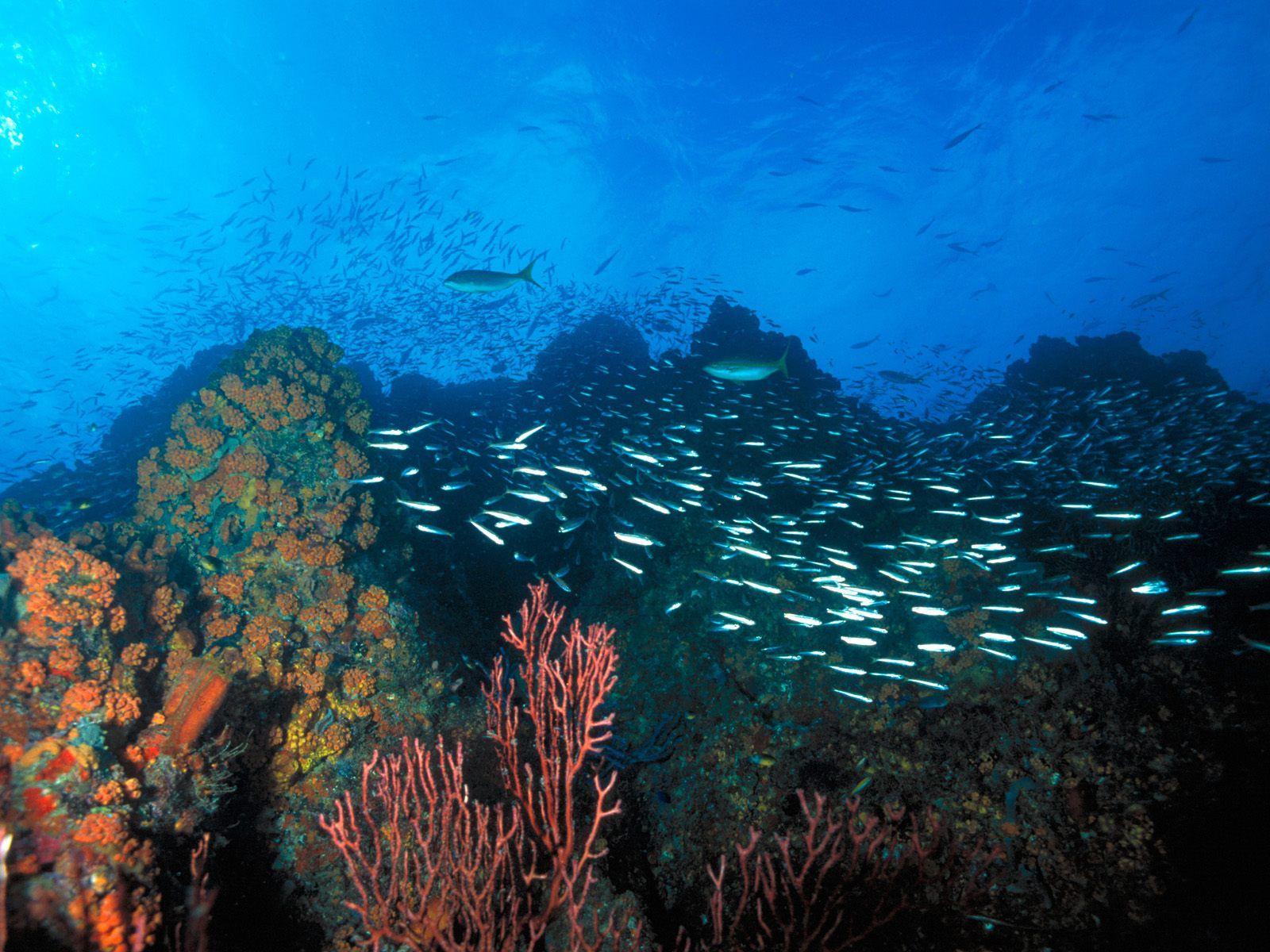 Arrecife de coral - Venezuela