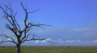 Cómo nos afecta el cambio climático a los seres humanos