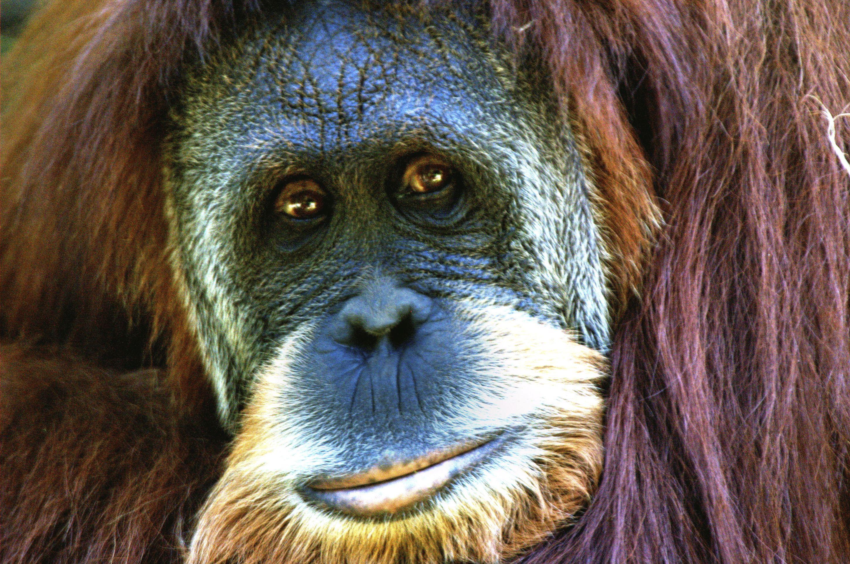 como-afecta-el-cambio-climatico-a-los-animales-Ecovidrio