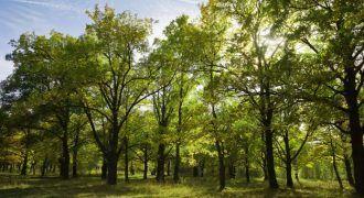 arboleda - conciencia ambiental