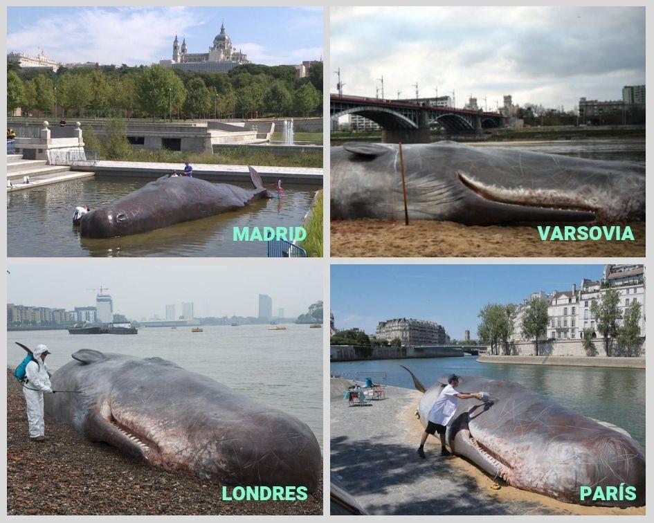 Campañas en diferentes países hechas por Captain Boomer con la figura del cachalote