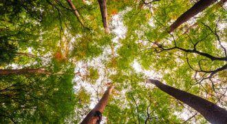 Agenda Ambiental 2019 - Los eventos más importantes de españa