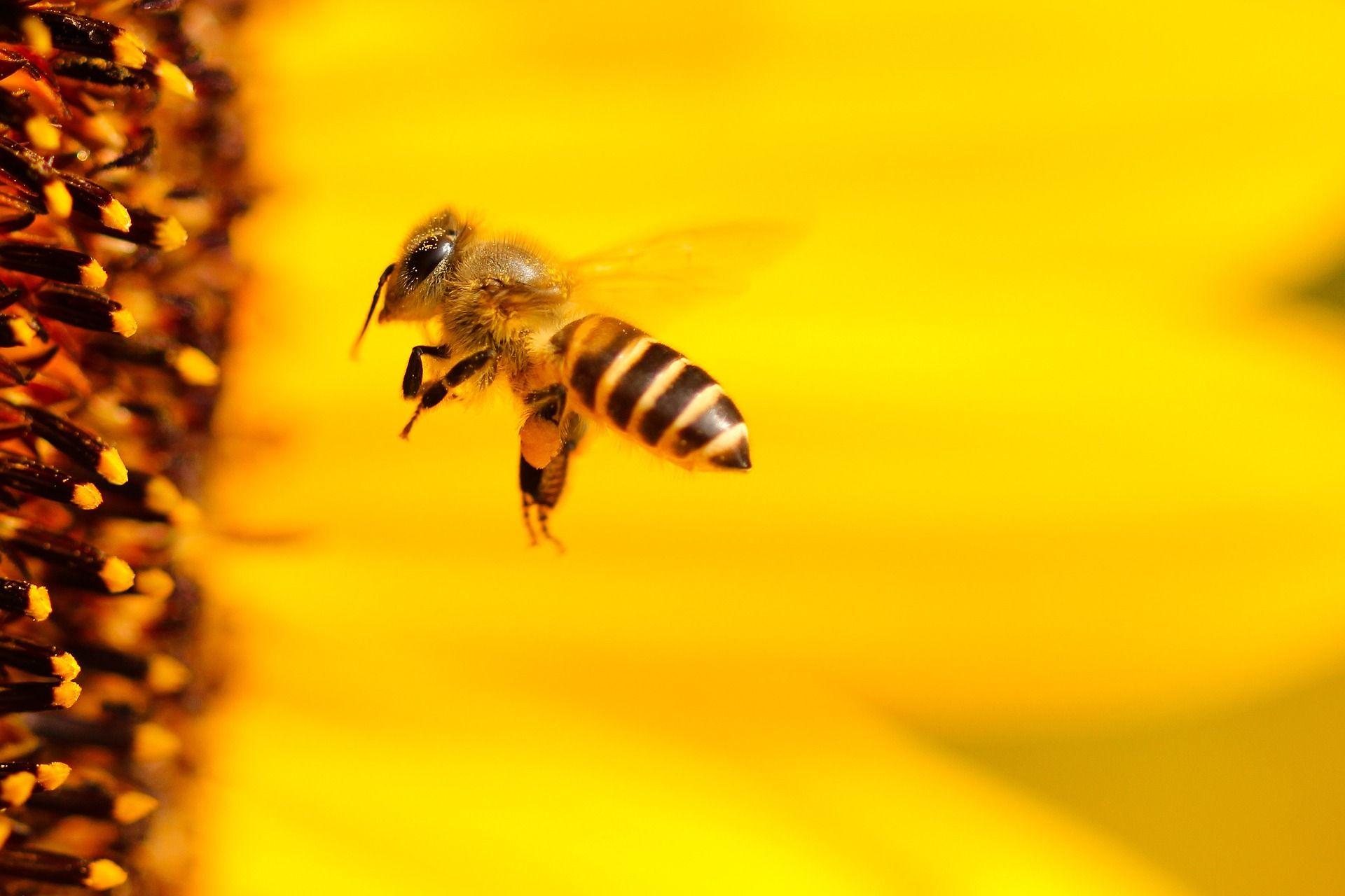 problemas medioambientales, la importancia de las abejas