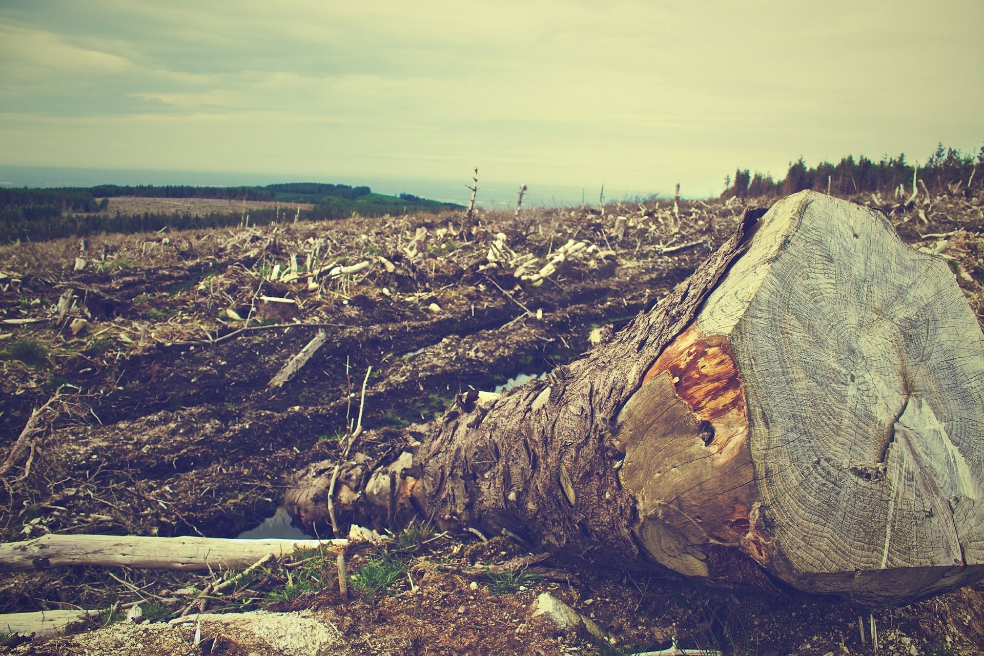 problemas medioambientales, deforestación