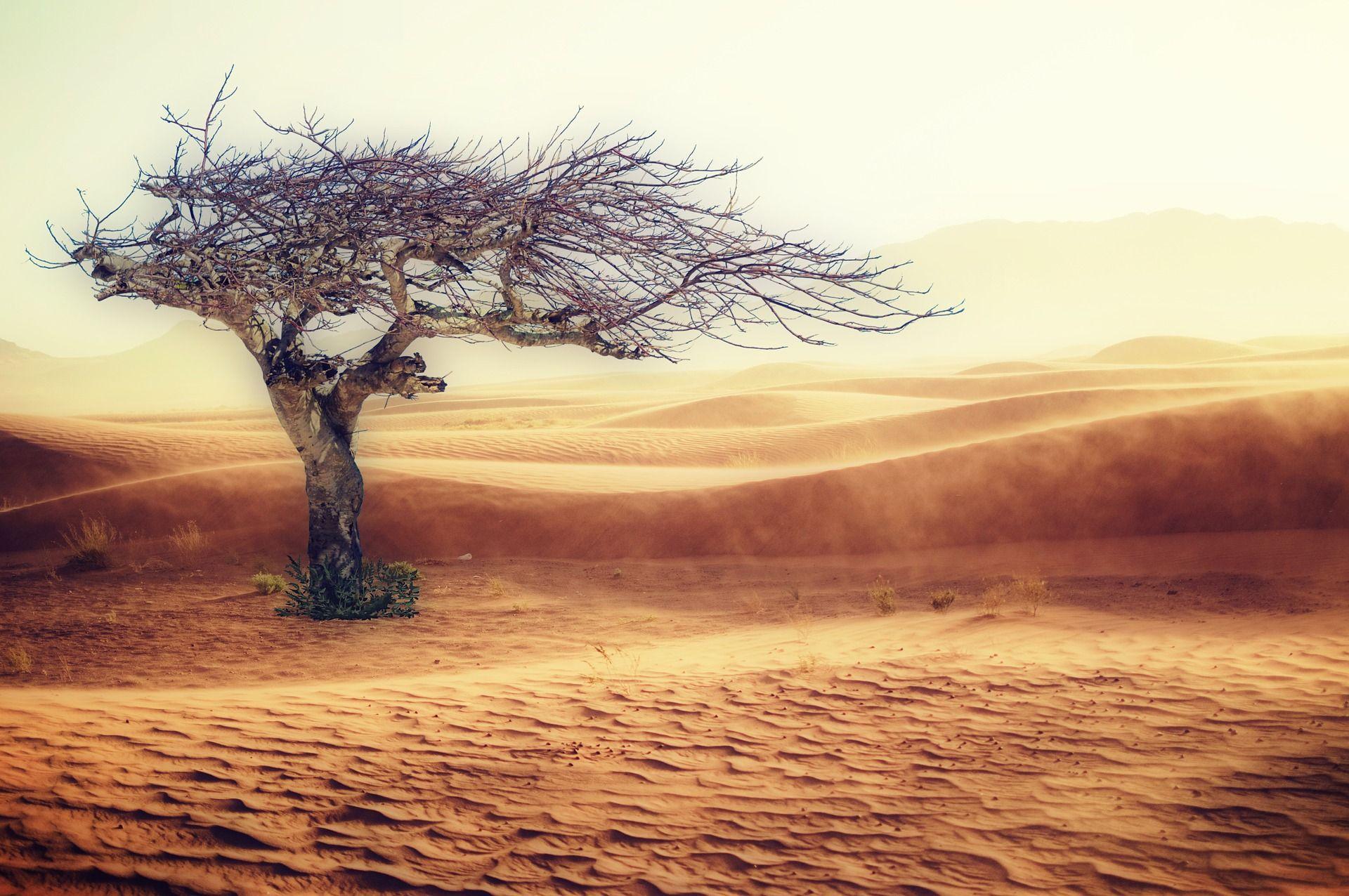 problemas medioambientales, escasez de agua