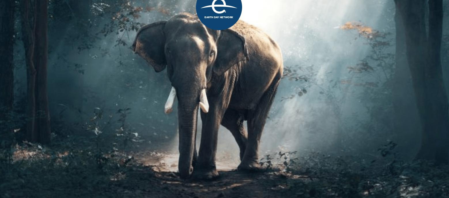como proteger a los animales en peligro de extincion