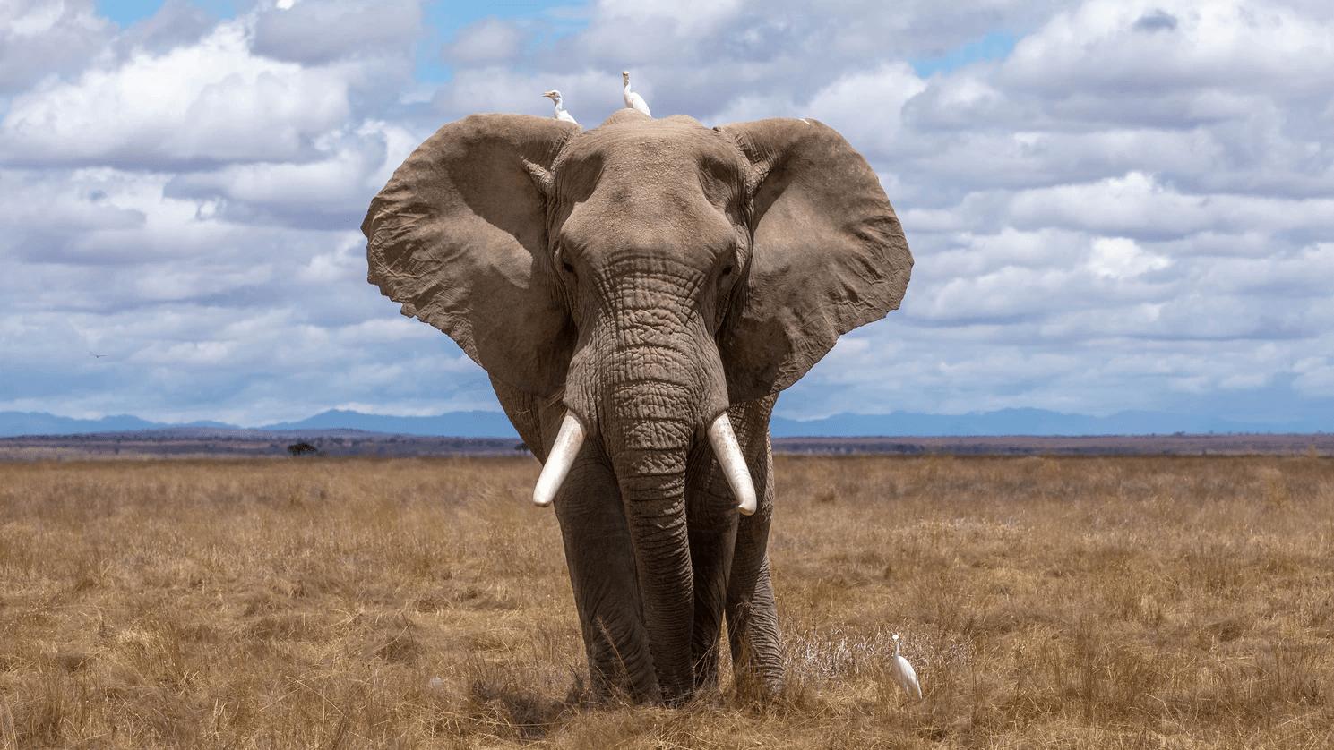 soluciones a la perdida de biodiversidad