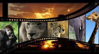 películas sobre medio ambiente y naturaleza
