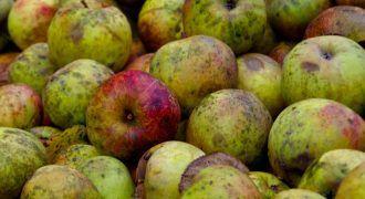 desperdicio-alimentario-frutas-Ecovidrio
