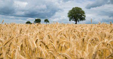 producción de alimentos e impacto ambiental