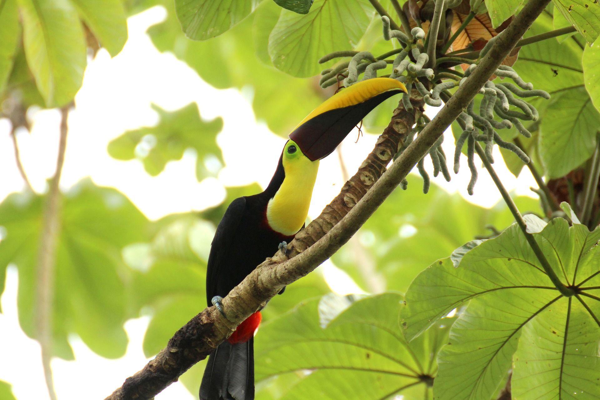 deforestación de Costa Rica