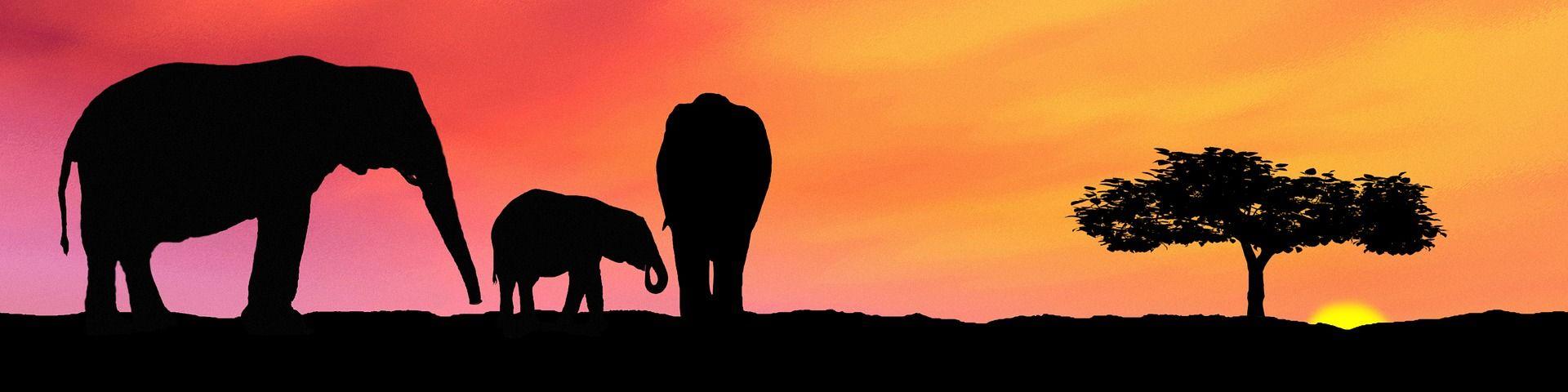 elefantes y cambio climatico