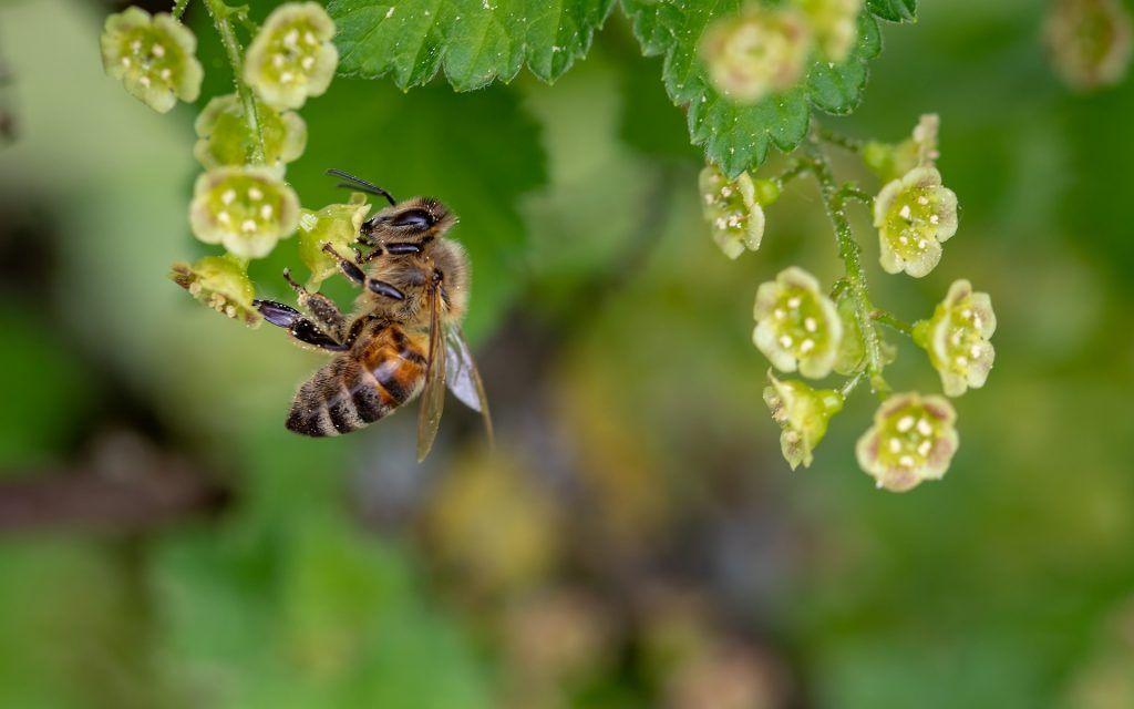 abejas y cambio climático - polinización