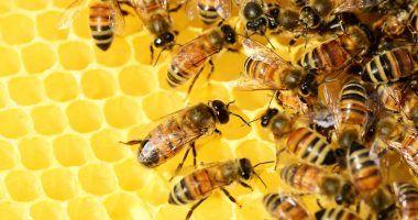 abejas y cambio climatico