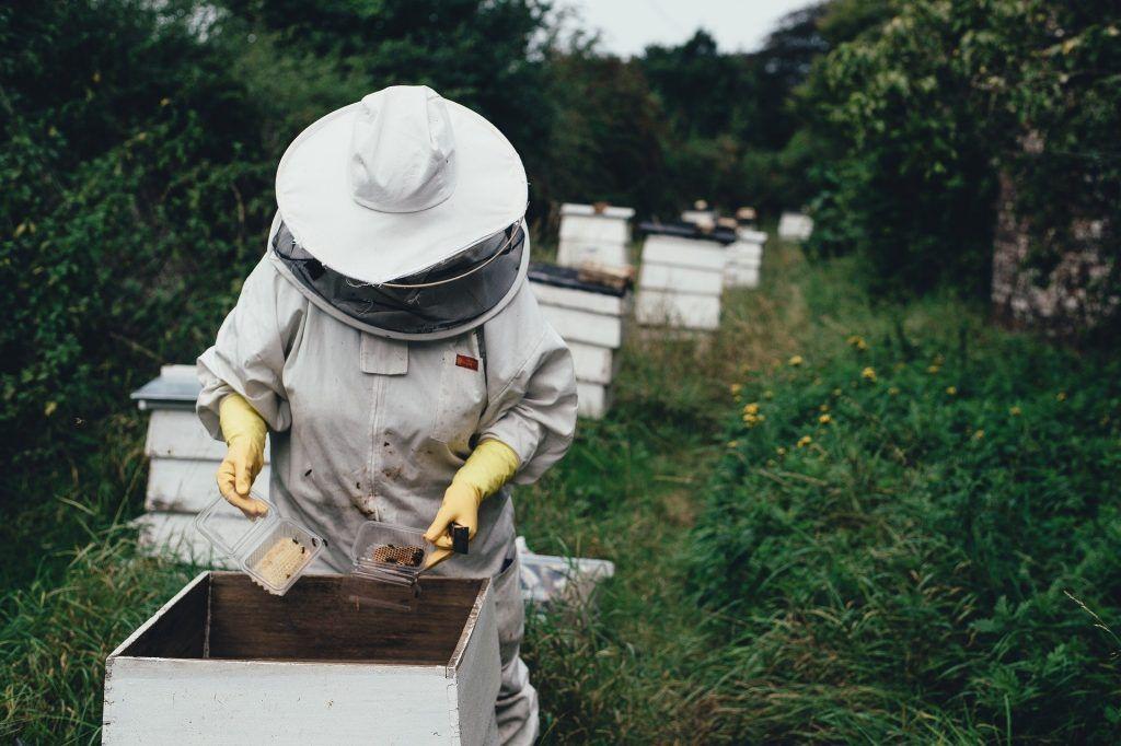 abejas y cambio climatico - colmena