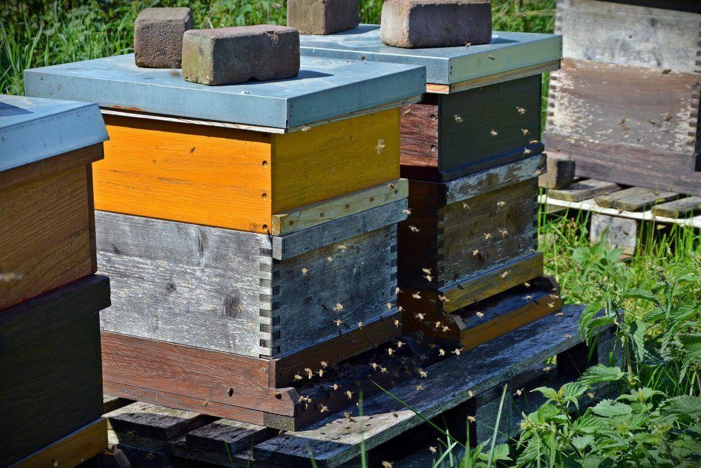 abejas y cambio climático - colmena urbana