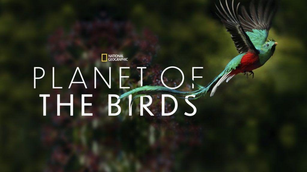 el planeta de los pajaros o planet of the birds el documental sobre animales y aves mas famoso