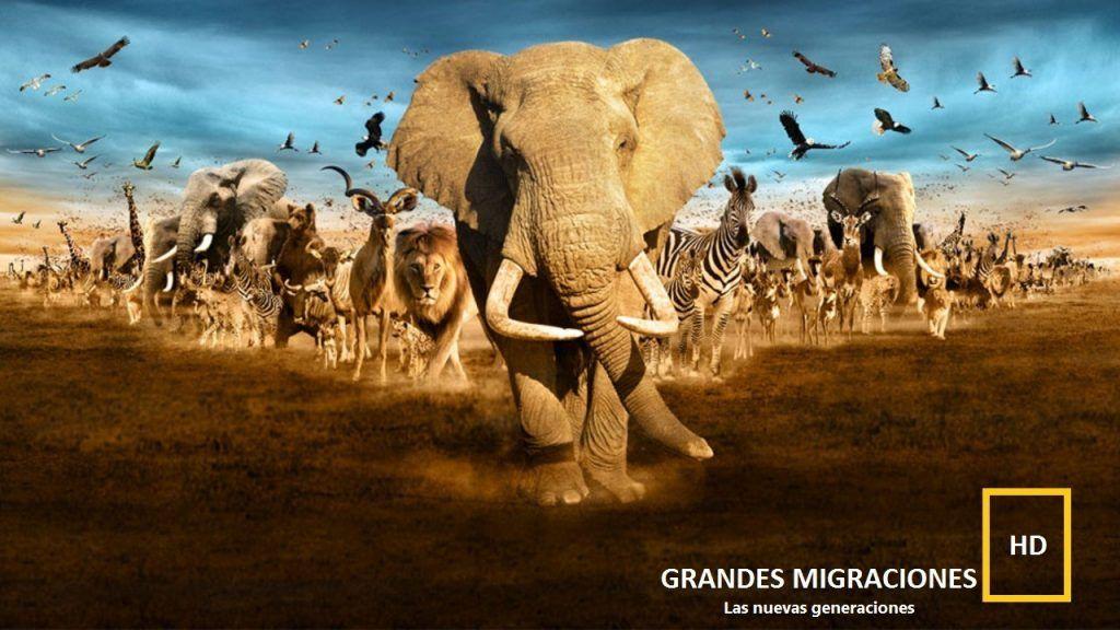 grandes migraciones uno de los documentales sobre animales mas impresionantes