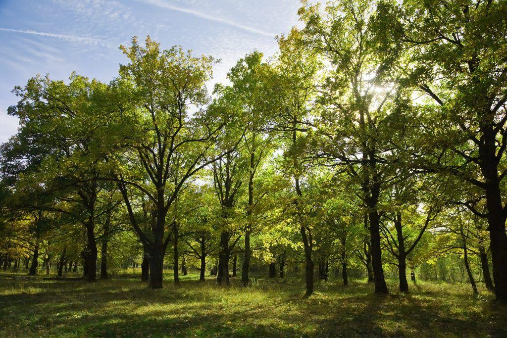 Dia mundial de la biodiversidad - arboleda