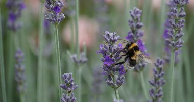 Dia mundial de la biodiversidad 2020