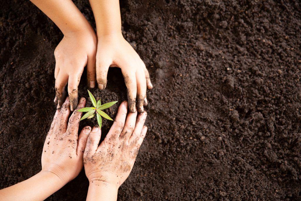 actividades sostenibles: plantar arboles