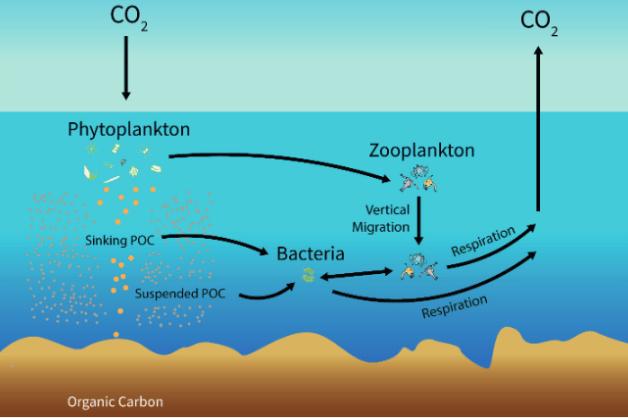 fertilización de los océanos como idea para frenar el cambio climático