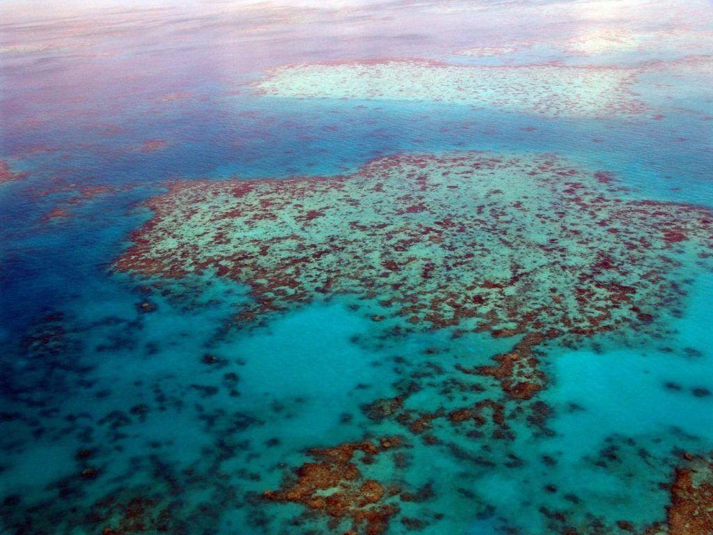 destinos fascinantes: el gran arrecife de coral