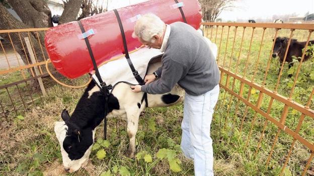 ideas para luchar contra el cambio climatico - vacas