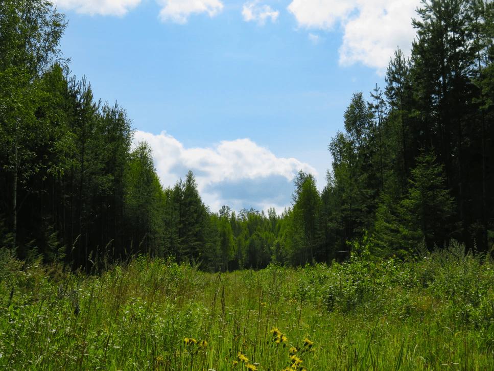 voluntariado ambiental en verano - colaborar en una plantación