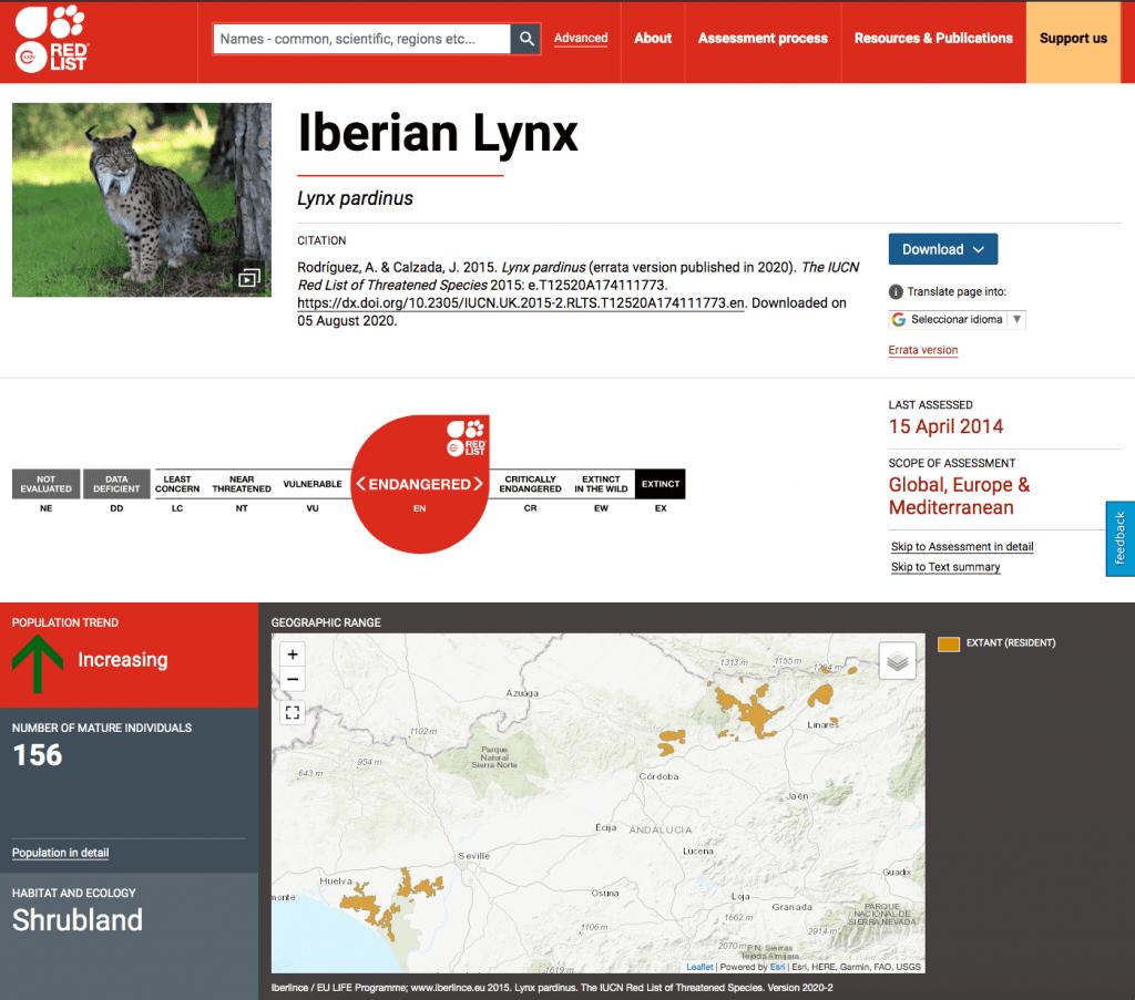 Lince ibérico - especie amenazada en recuperación