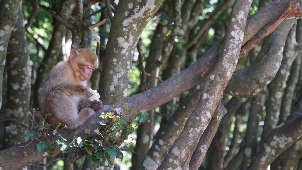 mono - biodiversidad y hábitat