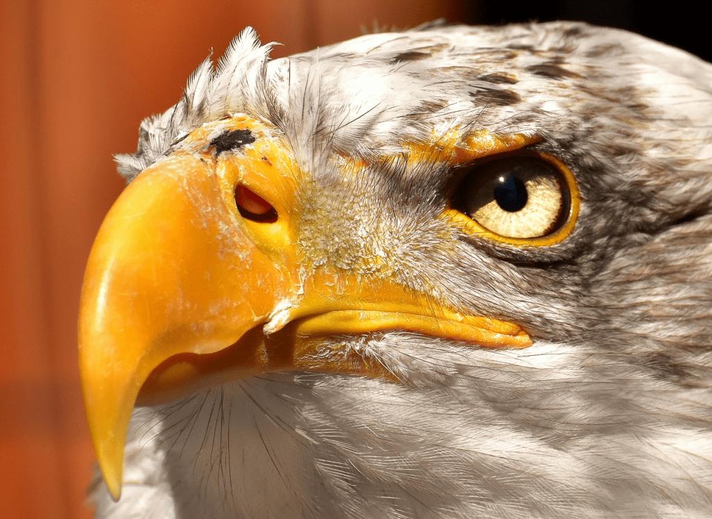 curiosidades del mundo natural - halcón
