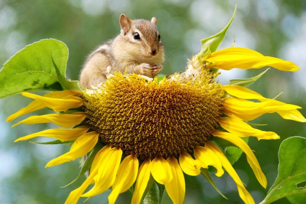 medidas para proteger la biodiversidad