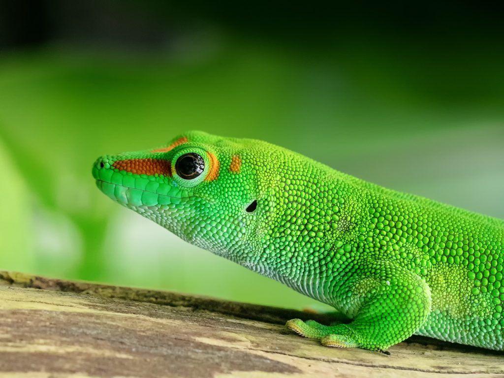 medidas para cuidar la biodiversidad - especies exoticas