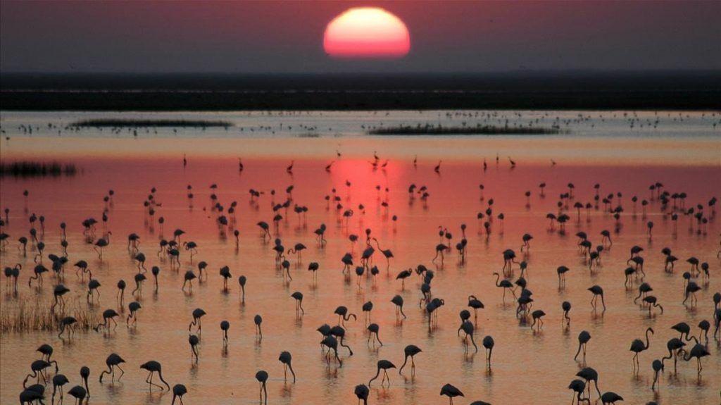 Paisajes increíbles de España: Parque Nacional de Doñana