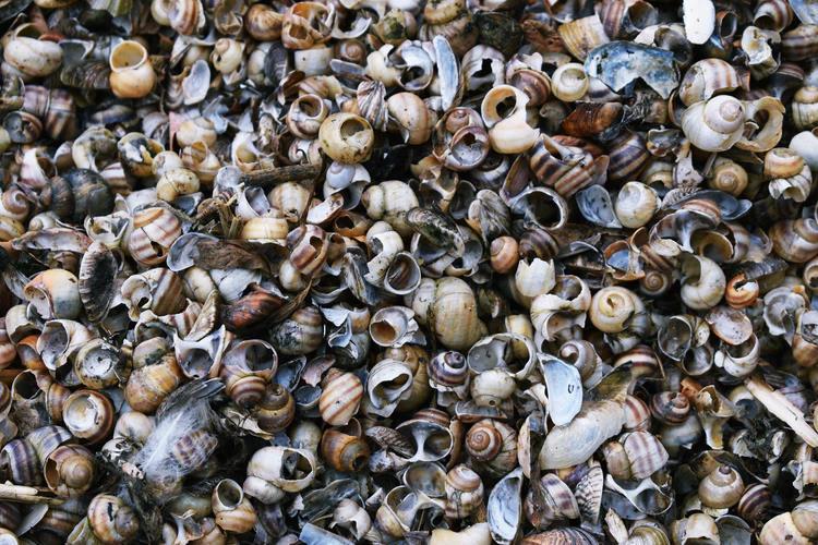 efectos de la acidificacion de los oceanos