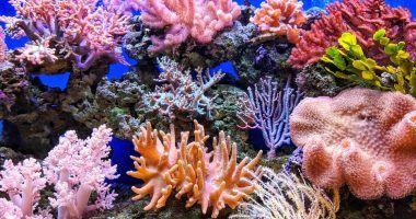 acidificación de los océanos: corales