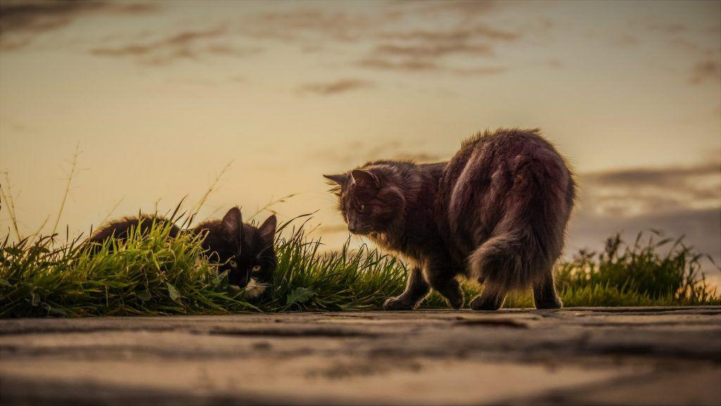 vida en la tierra sin humanos - gatos